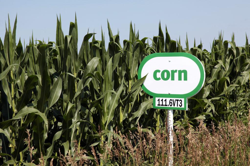 Corn sign beside field of corn